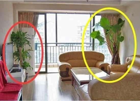 Không nên đặt những loại cây này trong nhà, bởi không tốt về mặt phong thủy!-1