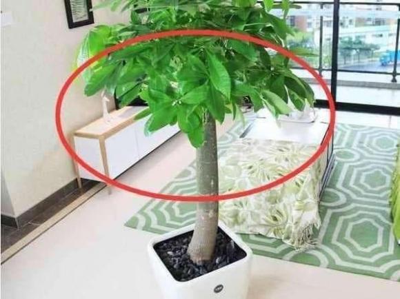 Không nên đặt những loại cây này trong nhà, bởi không tốt về mặt phong thủy!-3