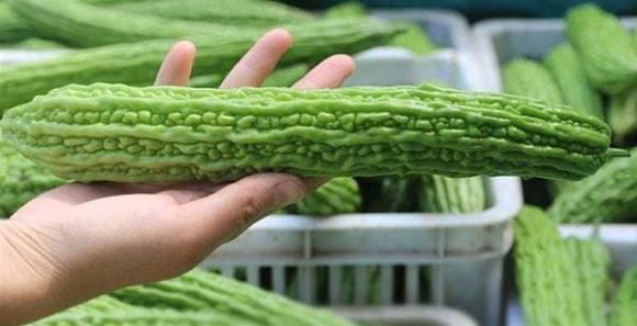Khi mua mướp đắng thì mua quả thẳng hay cong? Người nông dân trồng rau: Hãy xem 4 điểm, đừng nhầm nhé-5