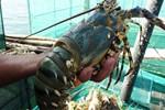 Ồ ạt rao bán nhà trọ, chung cư mini ở Hà Nội-3