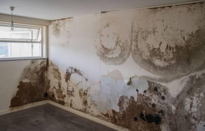 Không cần dùng một giọt nước, bức tường trắng bị mốc ở nhà ngay lập tức như mới-1