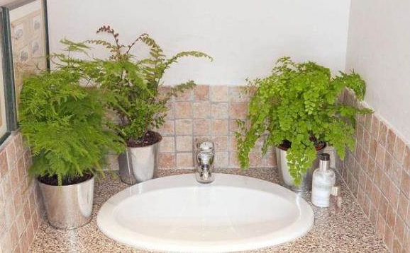 Những loại cây khử mùi, hút ẩm hiệu quả cho nhà vệ sinh, thậm chí muỗi cũng phải tránh xa-8