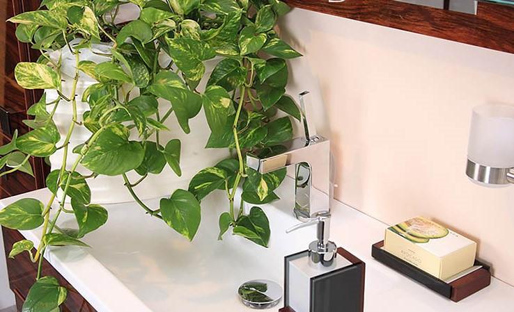 Những loại cây khử mùi, hút ẩm hiệu quả cho nhà vệ sinh, thậm chí muỗi cũng phải tránh xa-5
