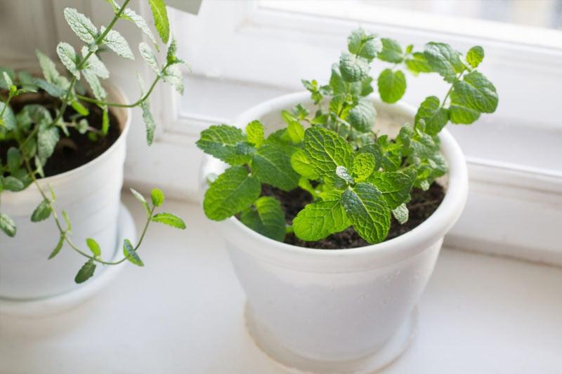 Những loại cây khử mùi, hút ẩm hiệu quả cho nhà vệ sinh, thậm chí muỗi cũng phải tránh xa-7