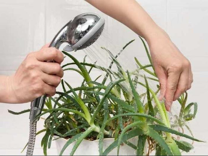 Những loại cây khử mùi, hút ẩm hiệu quả cho nhà vệ sinh, thậm chí muỗi cũng phải tránh xa-4
