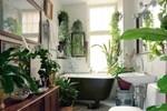 9 cây cảnh xinh đẹp, tốt cho không khí trong nhà dành cho những người lười-11