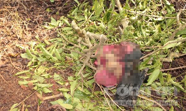 Bí ẩn xác chết treo trên cây giữa rẫy cà phê (Kỳ 1): Nữ giáo viên trẻ tuổi và vết bớt sau lưng-1