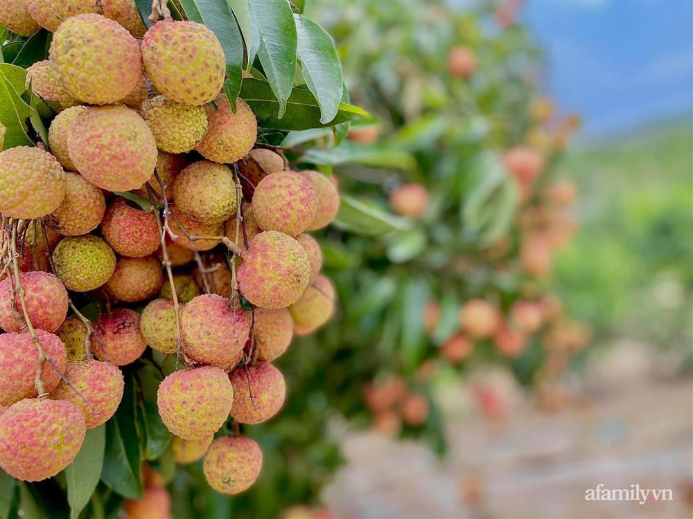 Khu vườn 200m² phủ kín rau xanh, quả sạch không khác gì nông trại của mẹ đảm Quảng Ninh-1