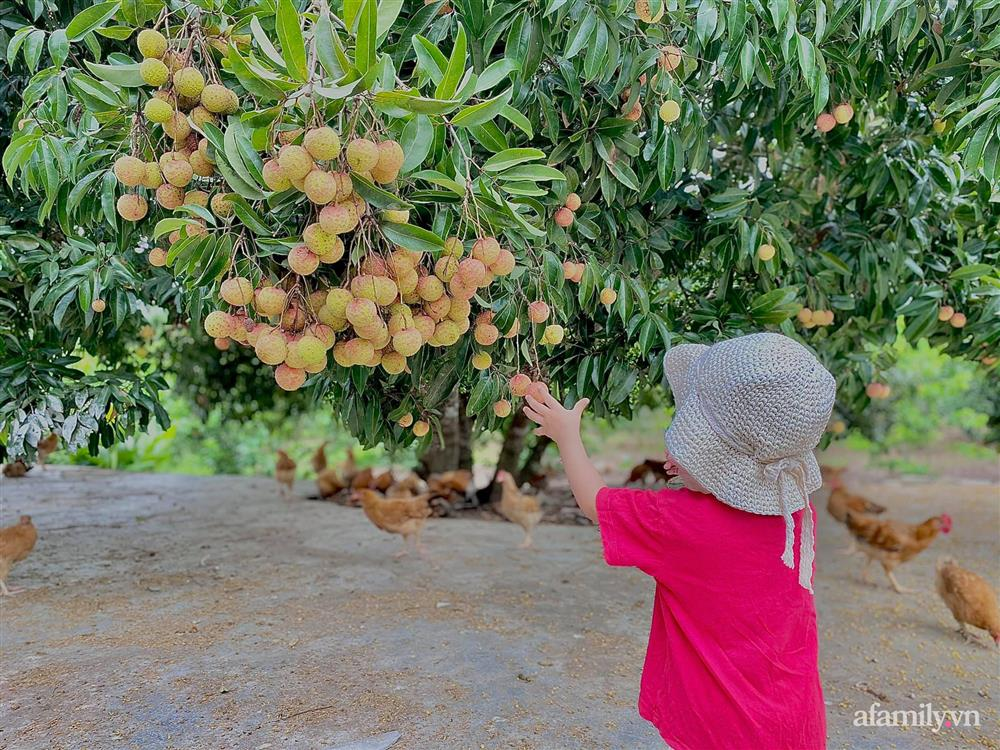 Khu vườn 200m² phủ kín rau xanh, quả sạch không khác gì nông trại của mẹ đảm Quảng Ninh-4