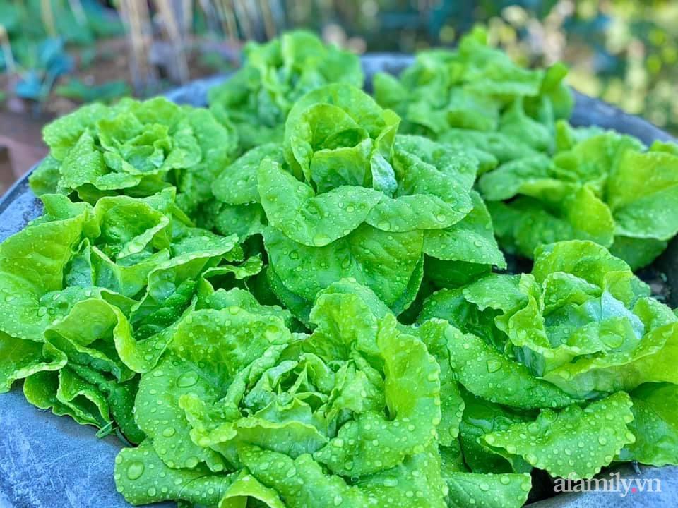 Khu vườn 200m² phủ kín rau xanh, quả sạch không khác gì nông trại của mẹ đảm Quảng Ninh-5
