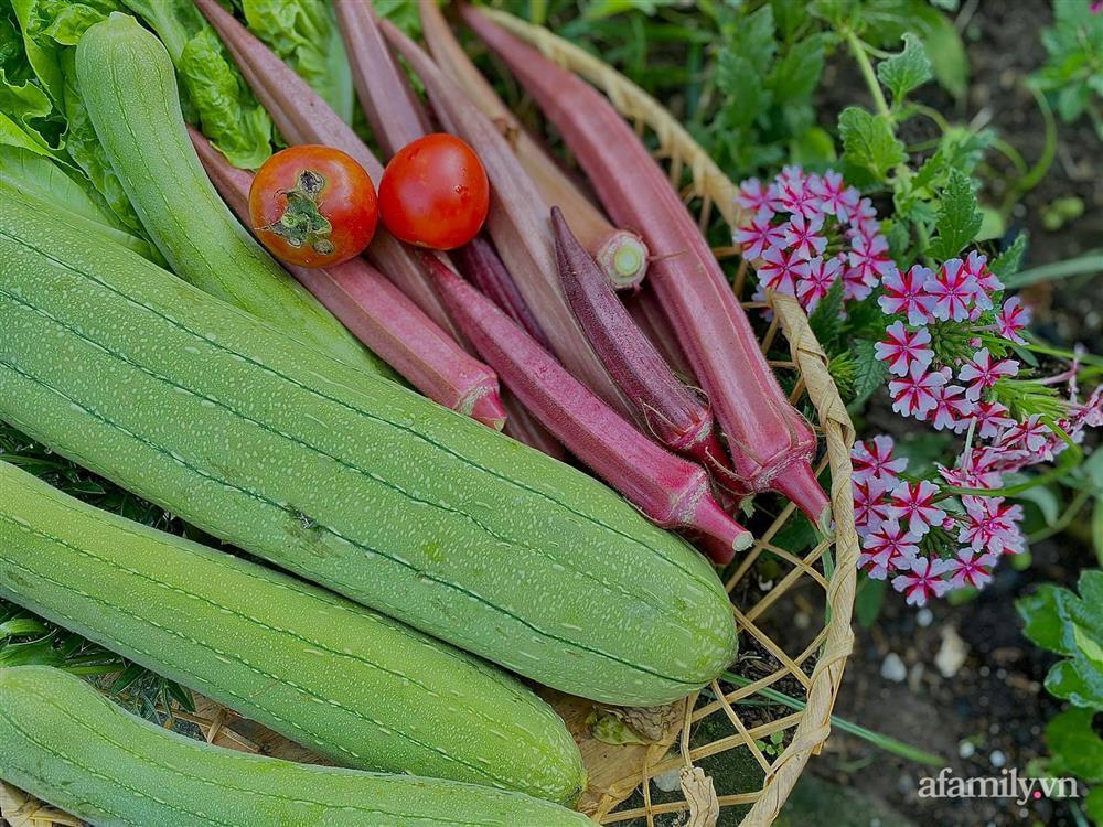 Khu vườn 200m² phủ kín rau xanh, quả sạch không khác gì nông trại của mẹ đảm Quảng Ninh-6