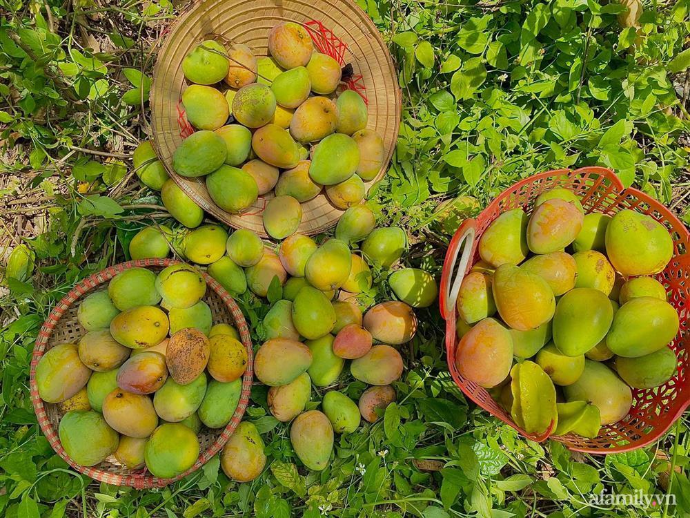 Khu vườn 200m² phủ kín rau xanh, quả sạch không khác gì nông trại của mẹ đảm Quảng Ninh-10