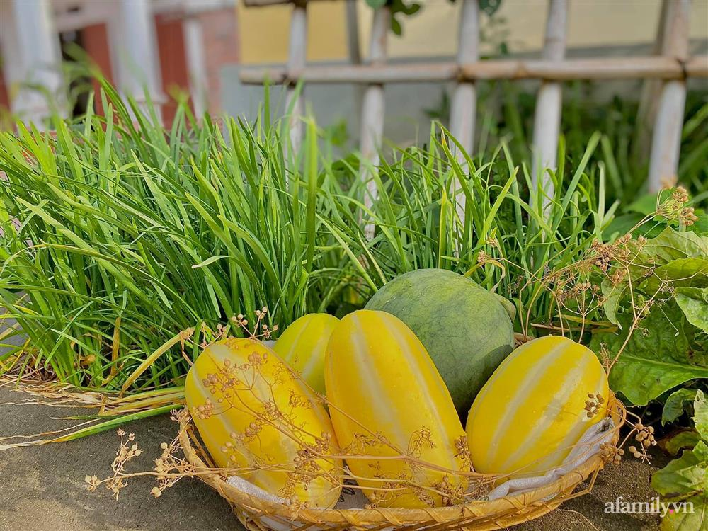 Khu vườn 200m² phủ kín rau xanh, quả sạch không khác gì nông trại của mẹ đảm Quảng Ninh-7