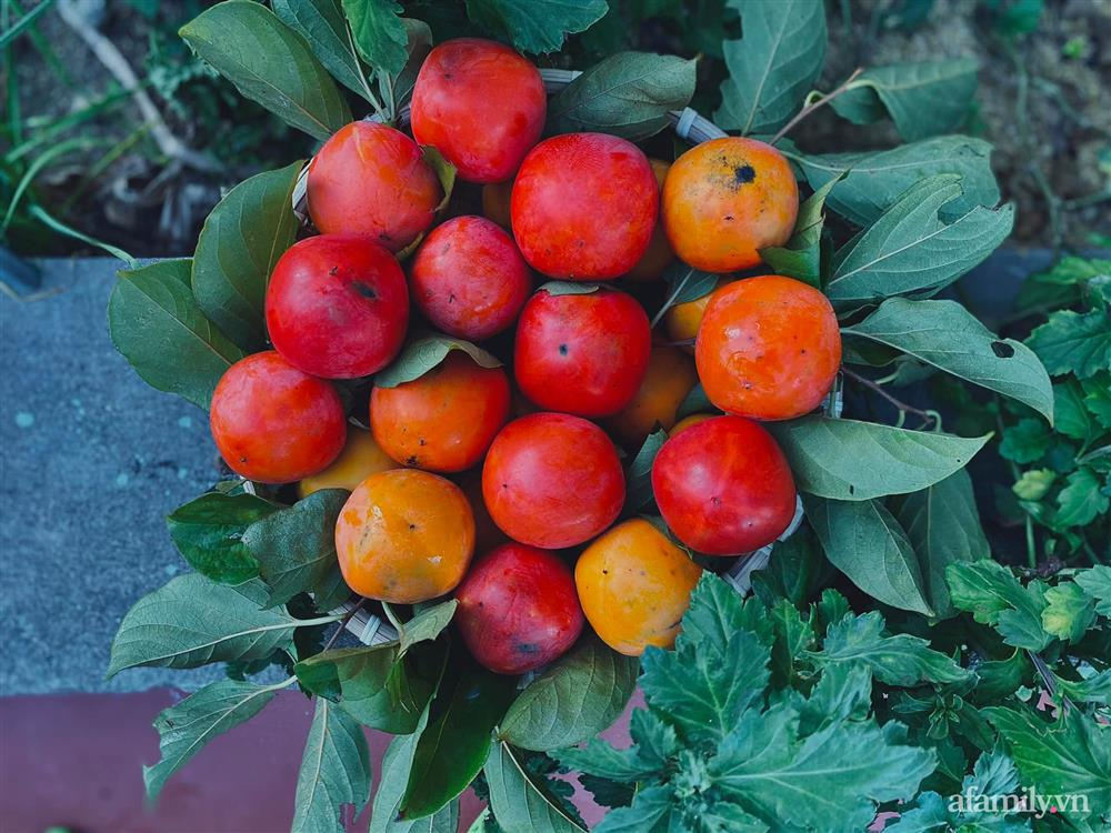 Khu vườn 200m² phủ kín rau xanh, quả sạch không khác gì nông trại của mẹ đảm Quảng Ninh-8