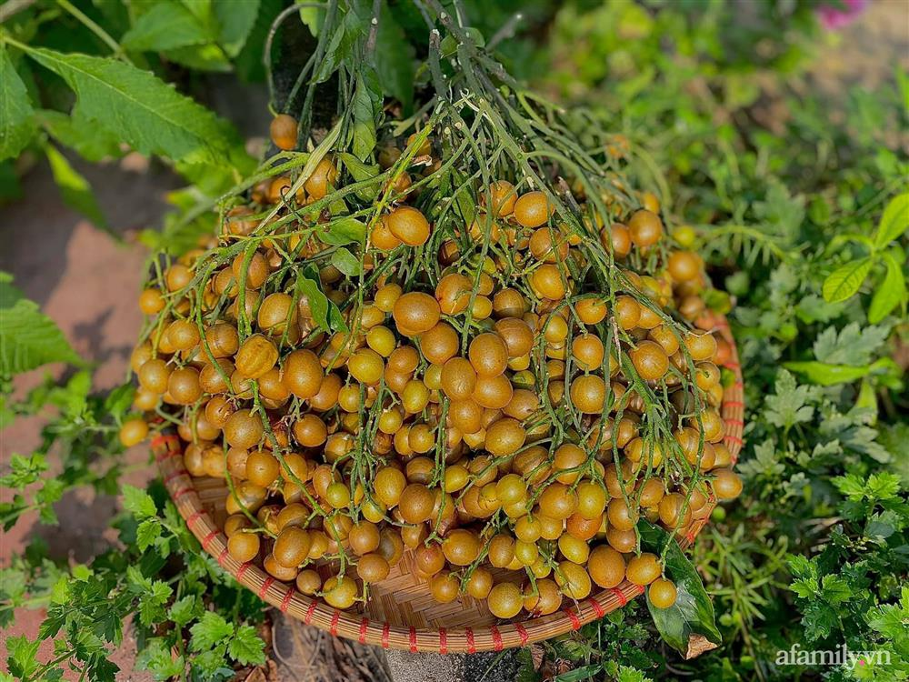 Khu vườn 200m² phủ kín rau xanh, quả sạch không khác gì nông trại của mẹ đảm Quảng Ninh-11