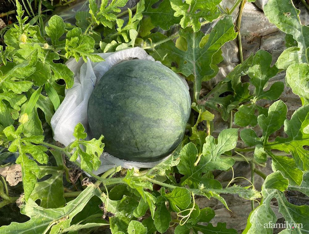 Khu vườn 200m² phủ kín rau xanh, quả sạch không khác gì nông trại của mẹ đảm Quảng Ninh-14