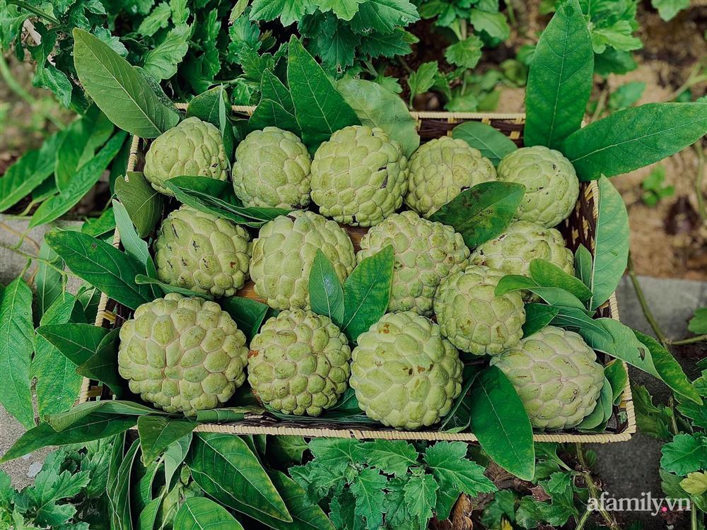Khu vườn 200m² phủ kín rau xanh, quả sạch không khác gì nông trại của mẹ đảm Quảng Ninh-15