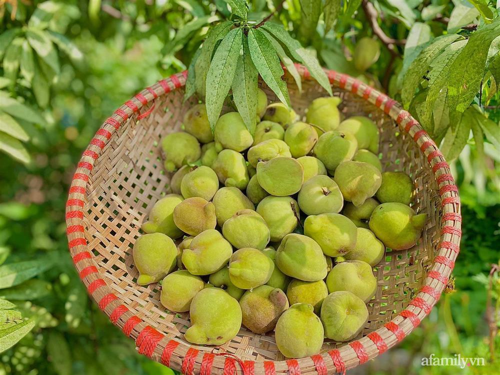Khu vườn 200m² phủ kín rau xanh, quả sạch không khác gì nông trại của mẹ đảm Quảng Ninh-17