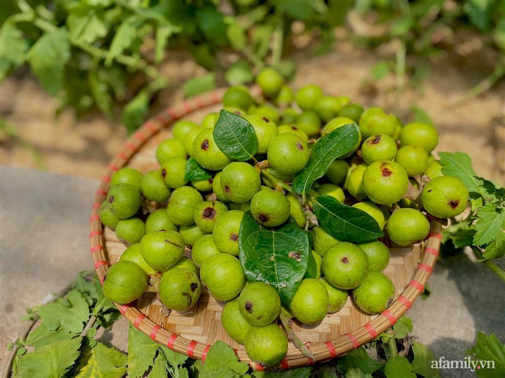 Khu vườn 200m² phủ kín rau xanh, quả sạch không khác gì nông trại của mẹ đảm Quảng Ninh-18