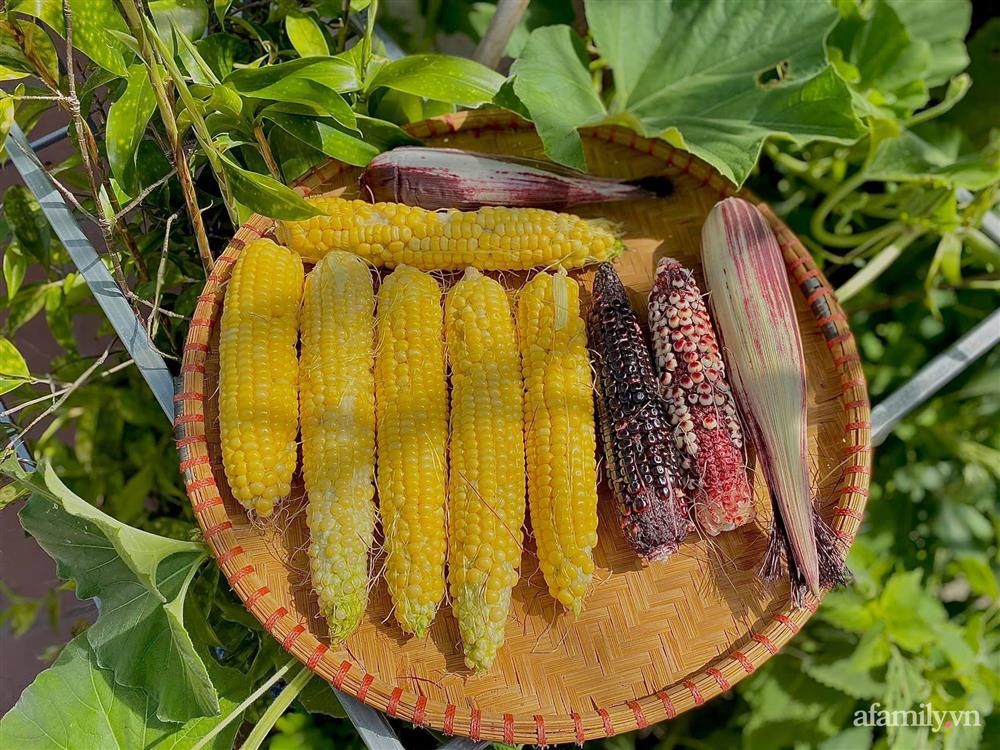 Khu vườn 200m² phủ kín rau xanh, quả sạch không khác gì nông trại của mẹ đảm Quảng Ninh-19