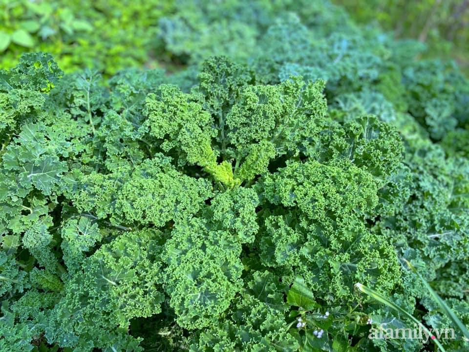 Khu vườn 200m² phủ kín rau xanh, quả sạch không khác gì nông trại của mẹ đảm Quảng Ninh-23