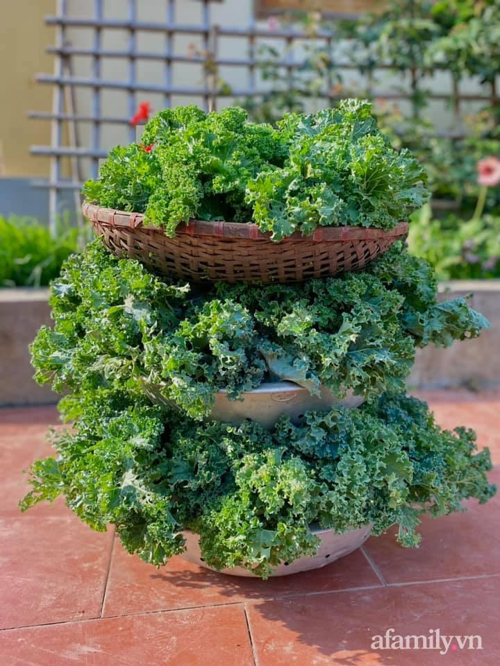Khu vườn 200m² phủ kín rau xanh, quả sạch không khác gì nông trại của mẹ đảm Quảng Ninh-25