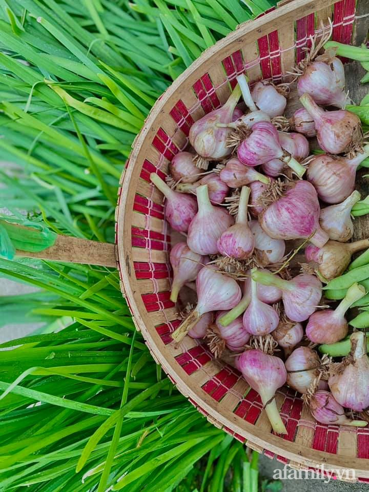 Khu vườn 200m² phủ kín rau xanh, quả sạch không khác gì nông trại của mẹ đảm Quảng Ninh-26