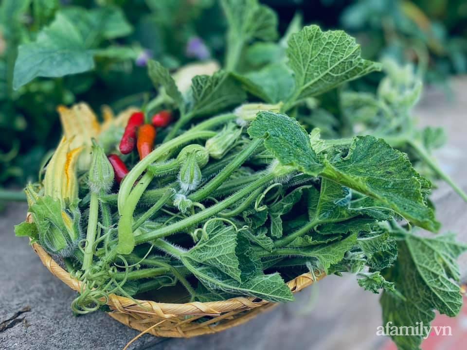 Khu vườn 200m² phủ kín rau xanh, quả sạch không khác gì nông trại của mẹ đảm Quảng Ninh-27