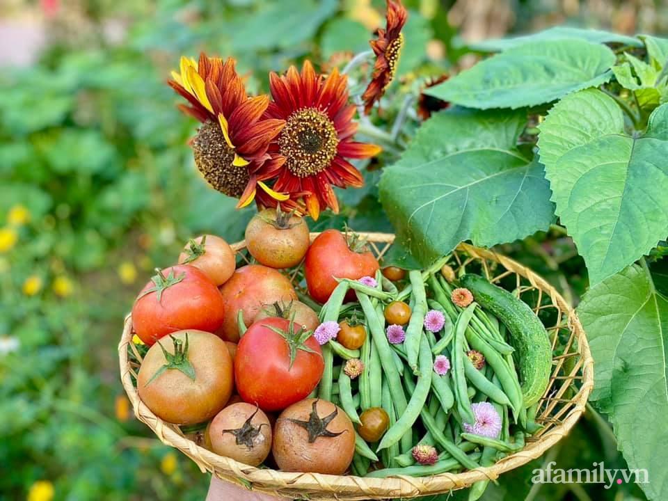 Khu vườn 200m² phủ kín rau xanh, quả sạch không khác gì nông trại của mẹ đảm Quảng Ninh-28
