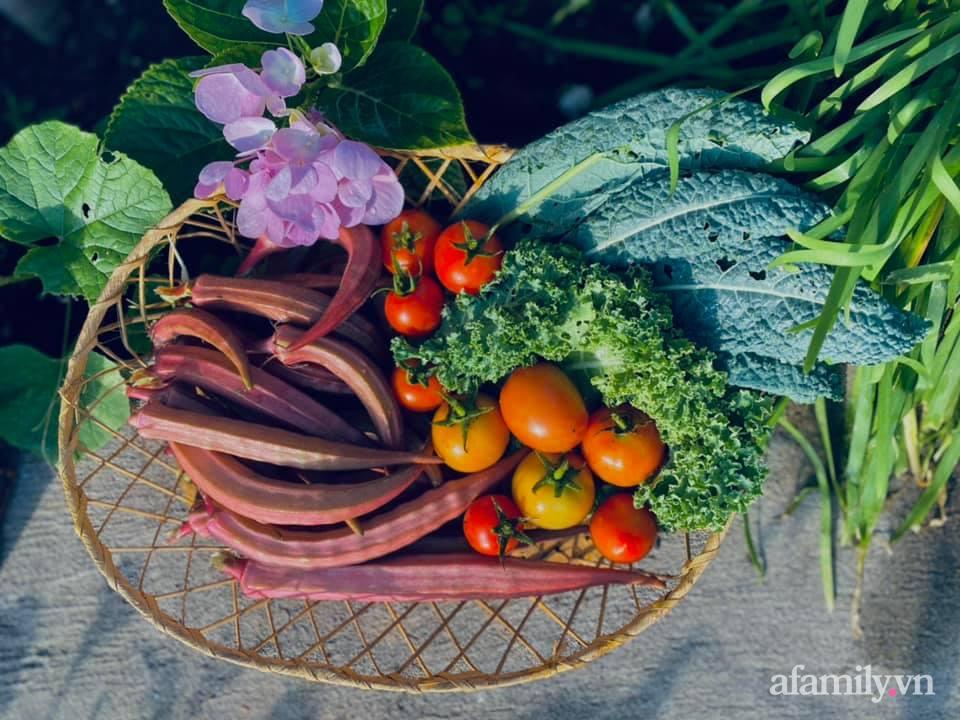 Khu vườn 200m² phủ kín rau xanh, quả sạch không khác gì nông trại của mẹ đảm Quảng Ninh-30