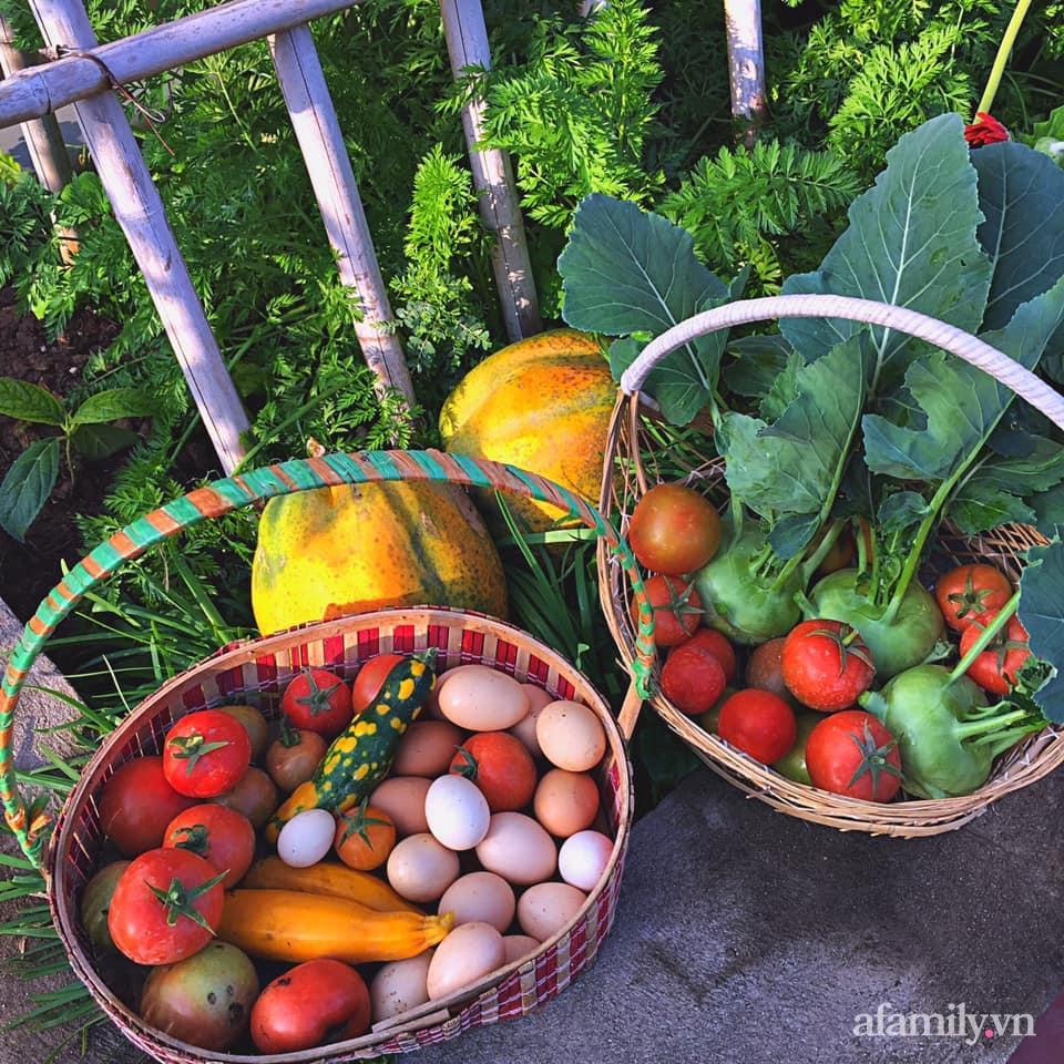 Khu vườn 200m² phủ kín rau xanh, quả sạch không khác gì nông trại của mẹ đảm Quảng Ninh-32
