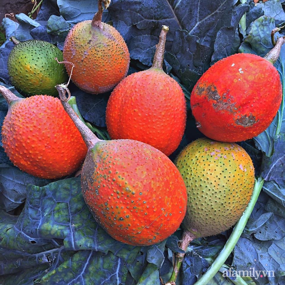 Khu vườn 200m² phủ kín rau xanh, quả sạch không khác gì nông trại của mẹ đảm Quảng Ninh-34