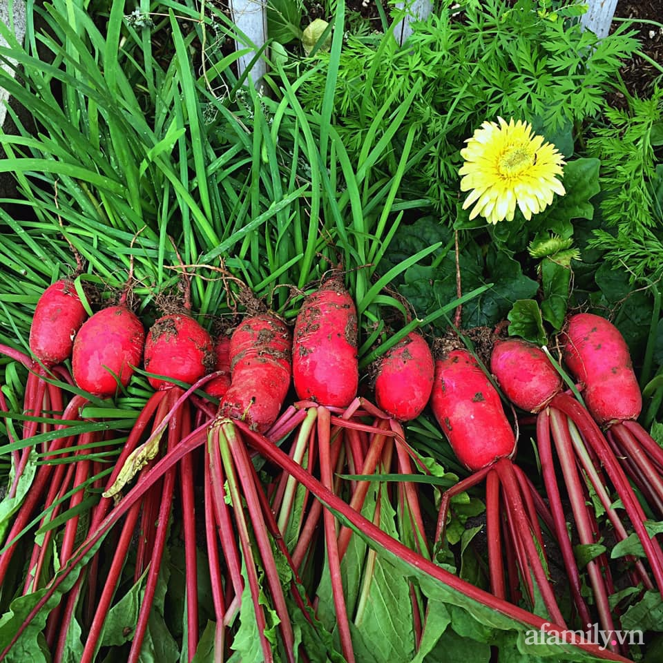 Khu vườn 200m² phủ kín rau xanh, quả sạch không khác gì nông trại của mẹ đảm Quảng Ninh-35