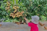 Khu vườn 200m² phủ kín rau xanh, quả sạch không khác gì nông trại của mẹ đảm Quảng Ninh