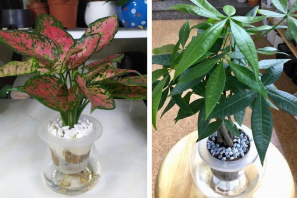 5 loại cây hút lộc, giải xui, trồng trong nhà thì việc làm ăn phất lên như diều gặp gió-1