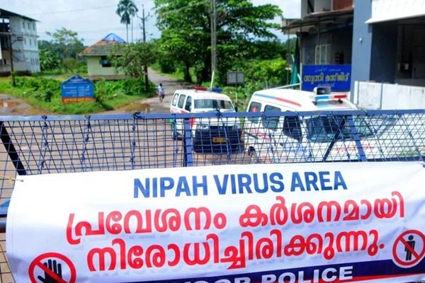 Lý do virus Nipah có thể gây đại dịch c.h.ết người giống như Covid-19-1