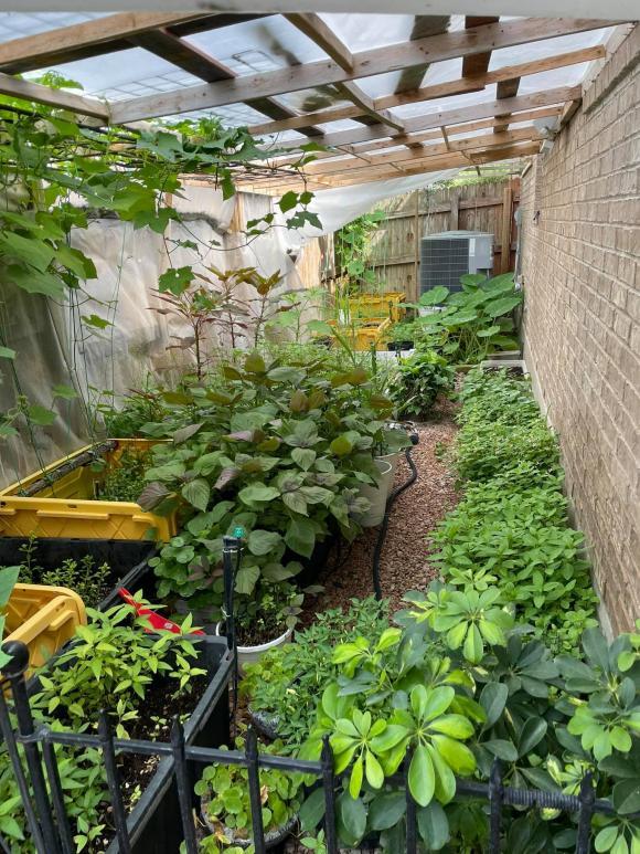 Ngắm vườn rau 350 m2 của ca sĩ Quách Thành Danh ở Mỹ-6