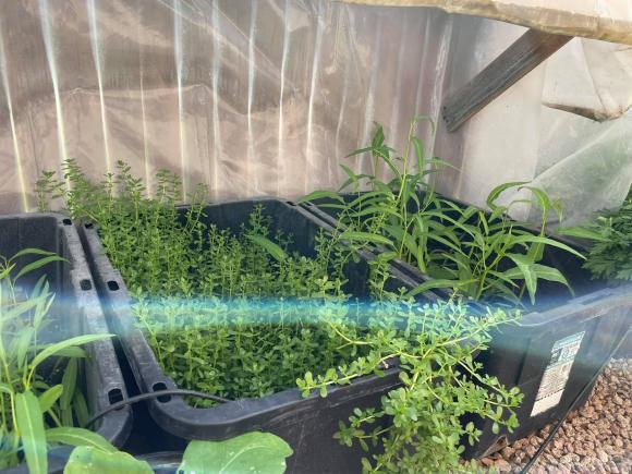 Ngắm vườn rau 350 m2 của ca sĩ Quách Thành Danh ở Mỹ-8