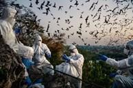 Thế giới luôn đứng trước nguy cơ về đại dịch mới từ virus corona