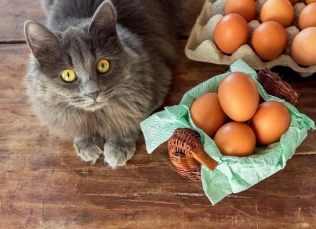 Muốn bữa sáng đủ chất, nhiều người ăn trứng kết hợp với món cực bổ này mà không biết sẽ gây tổn hại sức khỏe-2
