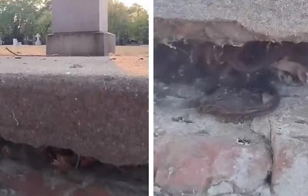 Đến thăm nghĩa trang, người đàn ông dựng tóc gáy với vật thể thò ra từ vết nứt ngôi mộ, càng nhìn càng không hiểu nổi-3