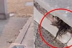 Đến thăm nghĩa trang, người đàn ông 'dựng tóc gáy' với vật thể thò ra từ vết nứt ngôi mộ, càng nhìn càng không hiểu nổi