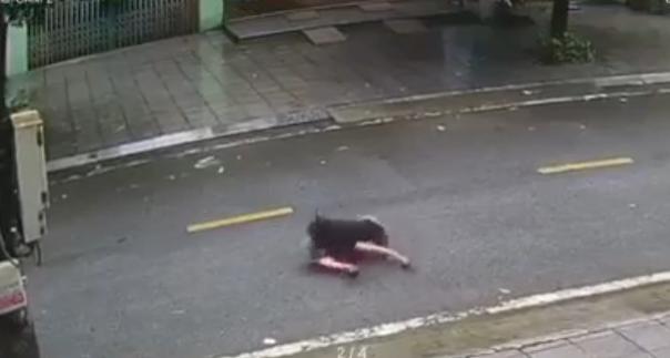 Kinh hãi cảnh bé trai trêu chó rồi bị phản đòn đầy đau đớn giữa đường phố-1