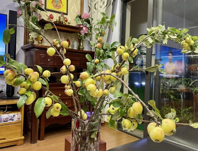 Thay cắm hoa tươi, táo mèo cả cành được ưa chuộng bất ngờ-1