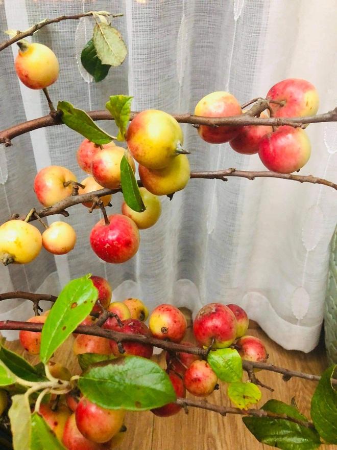 Thay cắm hoa tươi, táo mèo cả cành được ưa chuộng bất ngờ-6