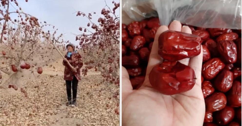 Loại quả thượng hạng của Trung Quốc được nhiều người Việt săn lùng, cách trồng và thu hoạch còn khiến dân mạng ngỡ ngàng hơn-1