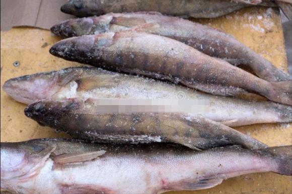 Dù rã đông loại cá nào đi chăng nữa, hãy nhớ đừng ngâm trong nước. Đầu bếp dạy bạn một mẹo đơn giản và nhanh chóng, cá tươi ngon hơn cá sống-2
