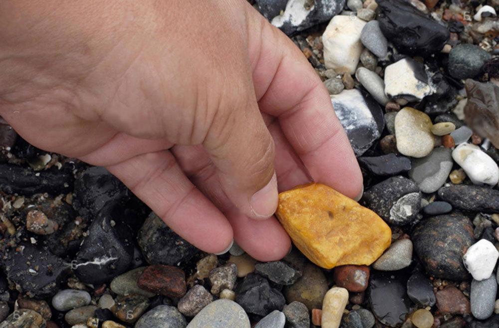 Những bí ẩn về long diên hương, giá hơn 7 tỷ đồng/kg-1