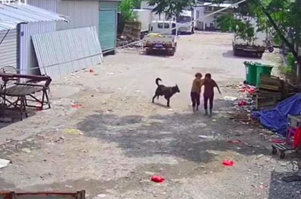 Bị chó dữ lao vào tấn công giữa đường, cụ bà tử vong thương tâm, hành động của người tài xế gần đó gây phẫn nộ tột độ-1