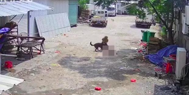 Bị chó dữ lao vào tấn công giữa đường, cụ bà tử vong thương tâm, hành động của người tài xế gần đó gây phẫn nộ tột độ-2